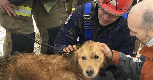 Dog rescued from 14-foot-deep sinkhole after 2 nights inside