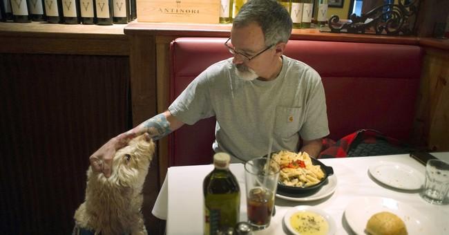Sorry, no kangaroos: Service-animal impostors face crackdown