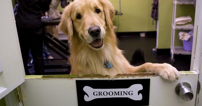 Labrador retrievers hit their 25th year as top US dog breed