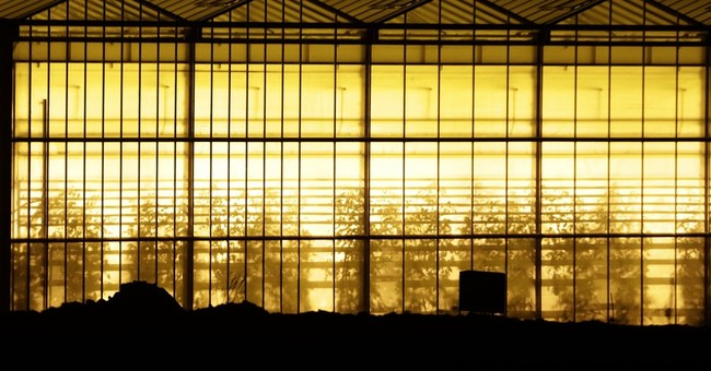 Czechs protest Polish greenhouse over light pollution