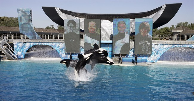 A look at troubled waters for SeaWorld