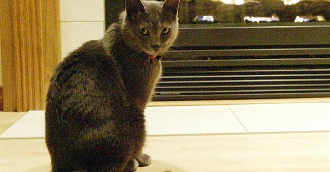 Catwalk: Wisconsin cat disappears, then reappears in Florida