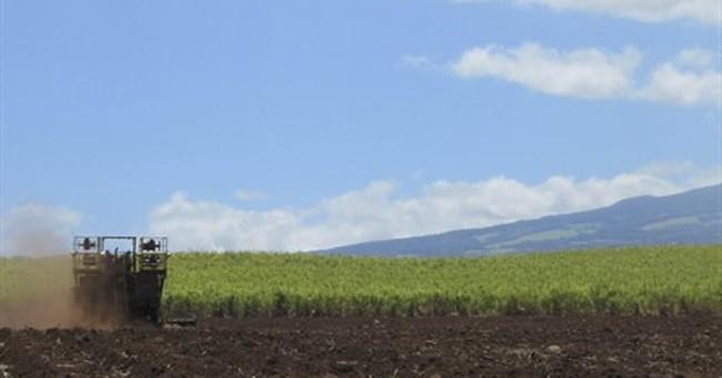 Hawaii's last sugar plantation to stop growing sugar