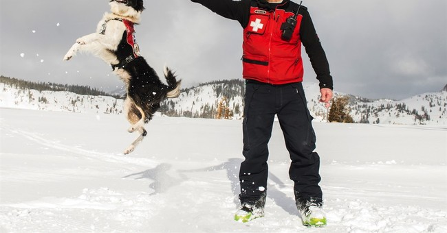 When an avalanche hits the slopes, let the dogs out