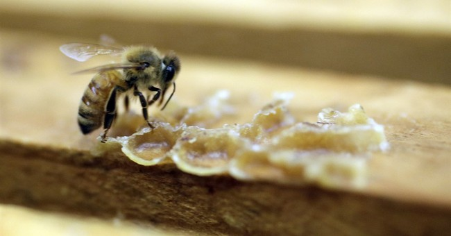 EPA says pesticide harms bees in some cases