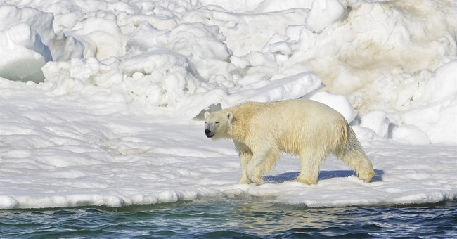 Appeals court upholds designation of polar bear habitat