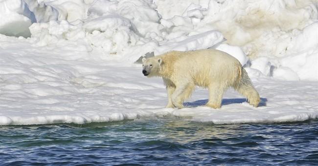 Appeals court upholds designation of polar bear habitat