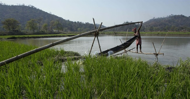 Image of Asia: Irrigating paddy fields in India