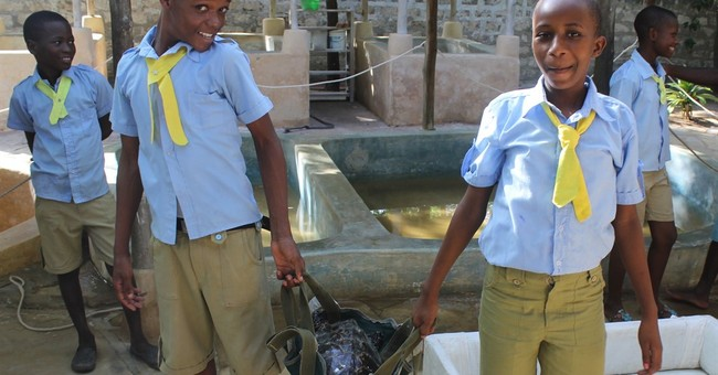 Turtles are key as Kenya balances ecology and development