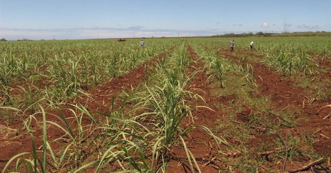 AP EXPLAINS: Why Hawaii's sugar plantations have disappeared
