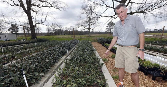 Pricey tea a growing niche crop in US, even Canada