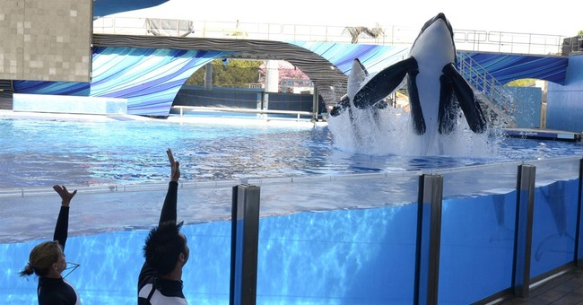 The Latest: California officials urge SeaWorld to drop suit
