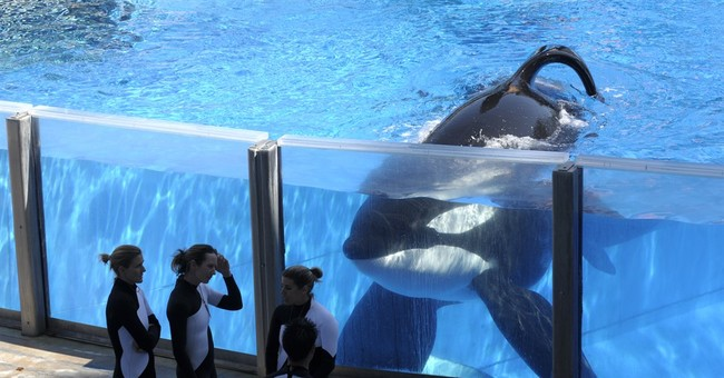 Years of troubled waters for SeaWorld's killer whale shows