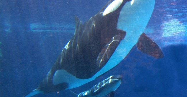 With orca changes, SeaWorld must live without iconic Shamu