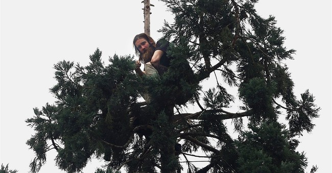 Man finally descends Seattle tree, ending 25-hour drama
