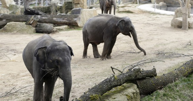 Elephant dung at Prague Zoo morphs into a new form: paper