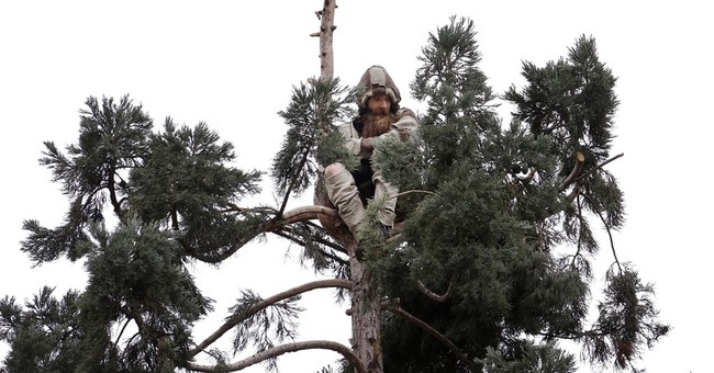 Man who spent a day in a Seattle tree is a no-show in court