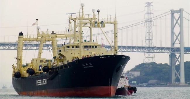 Japanese fleet returns with quota of 333 whales in Antarctic