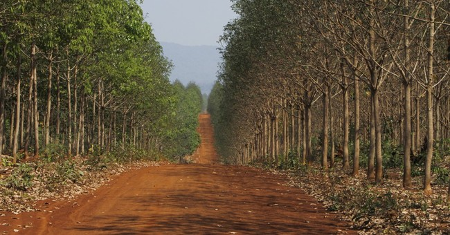 Q&A on impact of economic land concessions in Southeast Asia