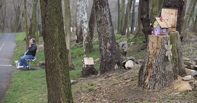 Tiny gnome homes evicted from park start appearing elsewhere
