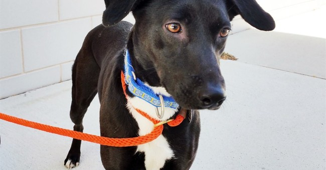 Animal Planet explores ASPCA program for second chance dogs