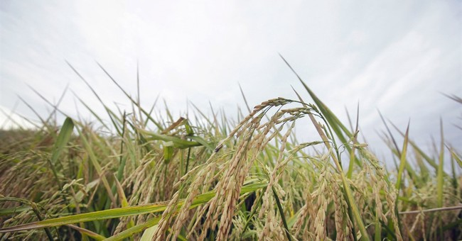 FDA proposes limit for arsenic in baby rice cereal