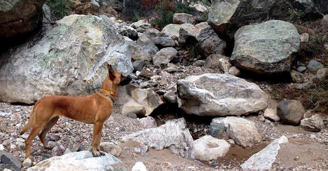 New leash on life: K-9 gets second chance tracking jaguar
