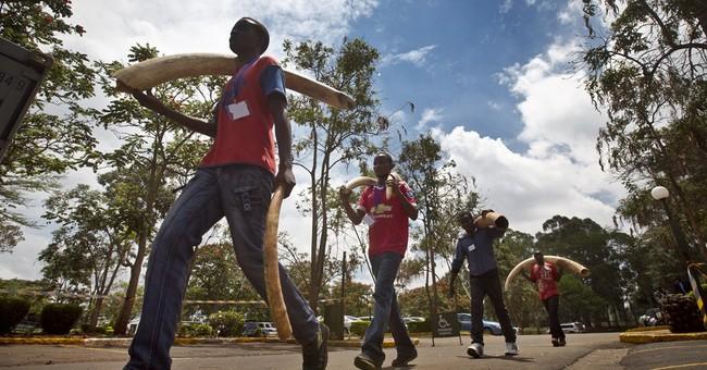 Kenya set to burn 106 tons of ivory and rhino horn