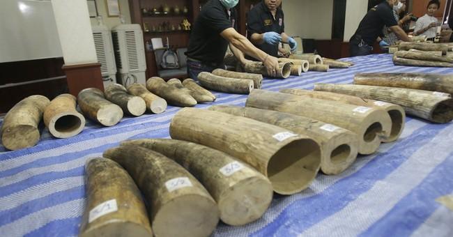 Thailand seizes 87 African ivory tusks worth $800,000