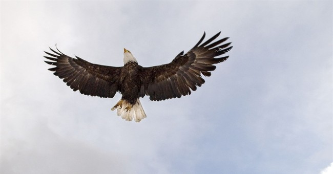 Bald Eagles Gone With The Wind