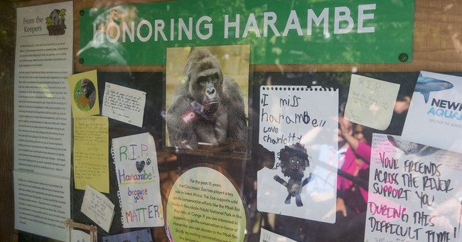 UMass: Making Harambe Jokes Is Racist And Possibly A Title IX Violation