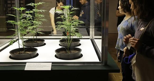 Massachusetts Likely Voting on Legal Marijuana This November