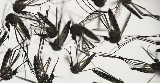 Zika Virus May Have Spread To U.S.