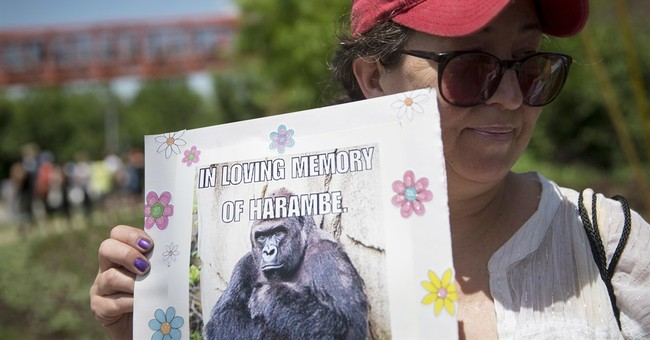Cincinnati Zoo: Cool It With The Harambe Memes