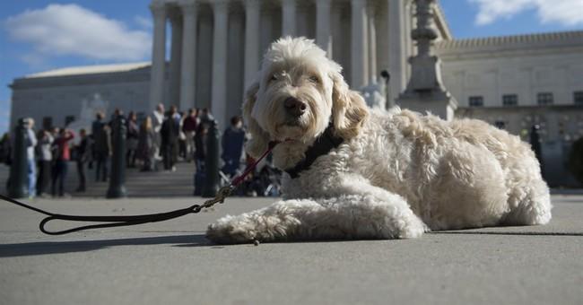 Shrink the Supreme Court?