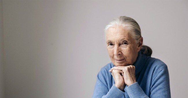 Jane Goodall: Magic of nature revealed in 'Born in China'