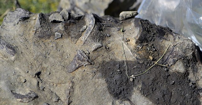 Hunter's find leads to discovery of prehistoric sea creature