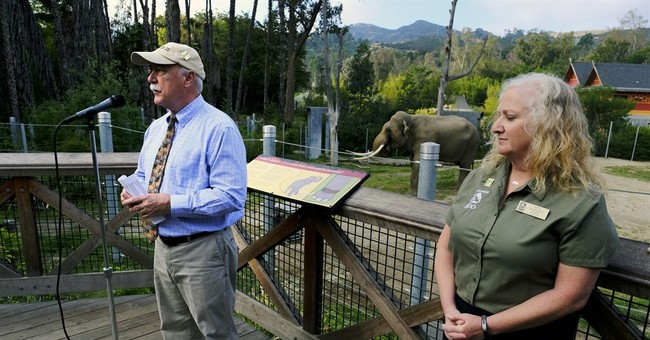 Battle brews over where to keep LA Zoo's Billy the elephant