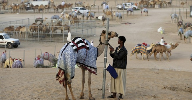 AP PHOTOS: Big-money camels gallop to victory outside Dubai