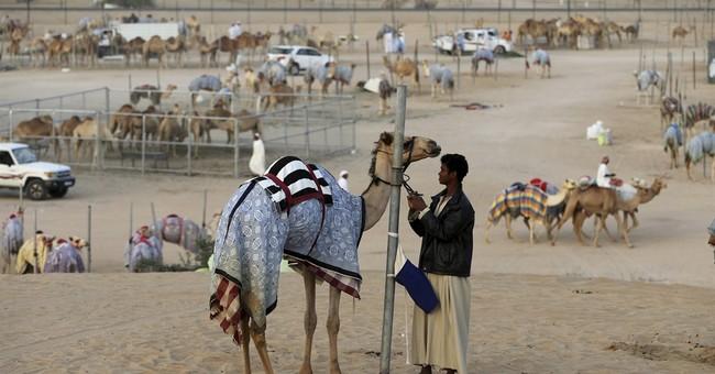AP PHOTOS: Big-money camels gallop to victory outside Dubai