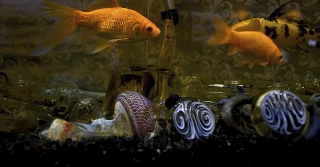Inside a Colorado pot club - a rare and endangered species