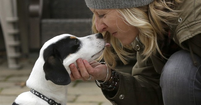 Match for mutts? New website helps people adopt the best dog