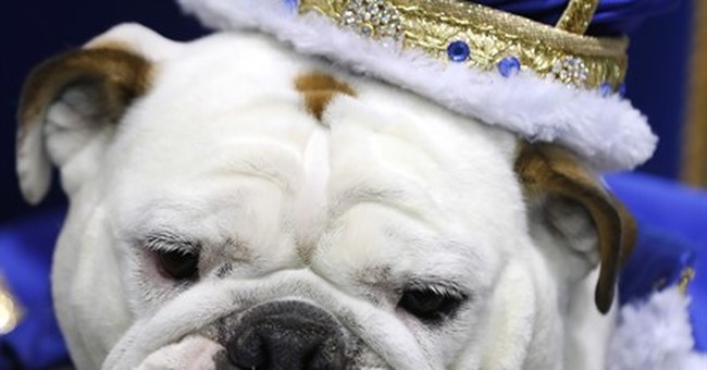 Local bulldog named Drake University's beautiful bulldog