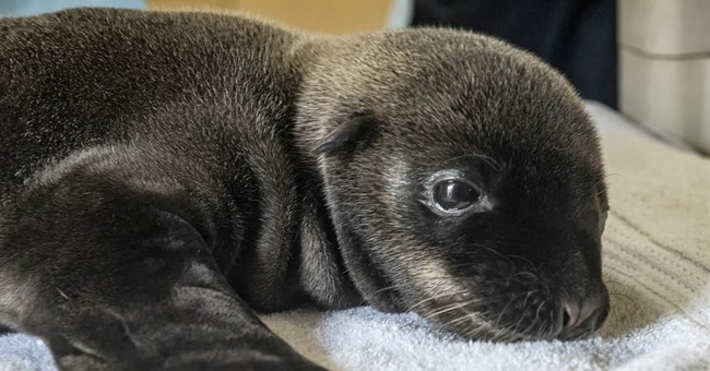 Premature baby sea lion dies at SeaWorld San Diego