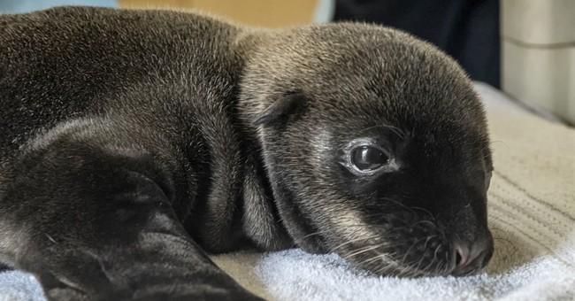 Premature baby sea lion dies at SeaWorld San Diego