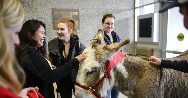 Donkey offers Finals Week stress relief at Montana State