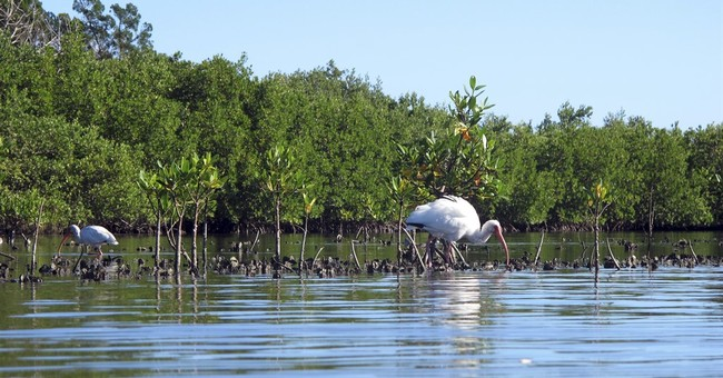Florida's building boom threatens wildlife-rich lagoon