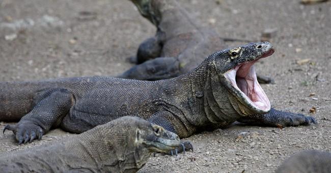 Komodo dragon bites Singaporean tourist in Indonesia