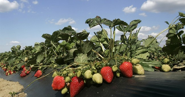 Strawberry scientist is sued over the fruits of his research
