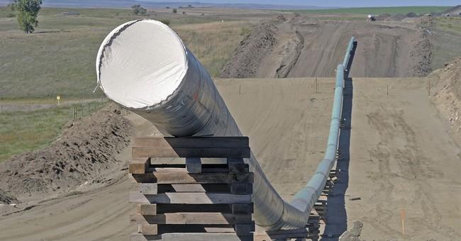 Dakota Access pipeline developer involved in tree dispute